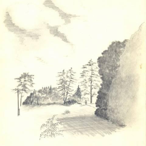 Румянцево лес
